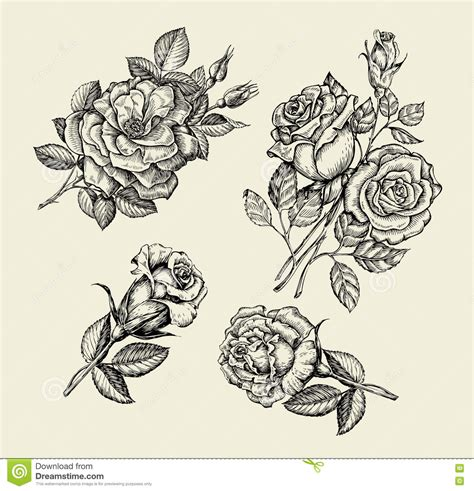 floral pattern hand drawing flowers hand drawn sketch flower rose dogrose rosehip