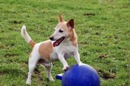 do dogs appendix facts about pets walker