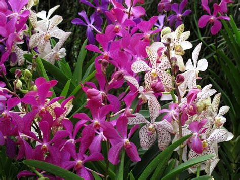 Orchid Garden by Fabulously In The City New Singapore Orchid Garden