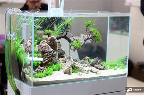 Small Tank Aquascaping 503 best images about aquascaping qm on fish