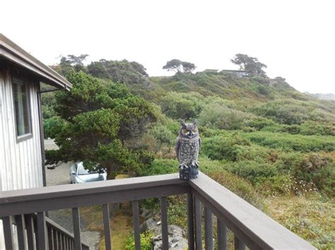 lighthouse bed and breakfast owl on porch veranda picture of lighthouse bed and