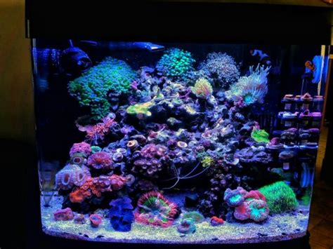 how do i set up a section 125 cafeteria plan up2no6ood s coralife biocube 29 gallon build nano reef forum