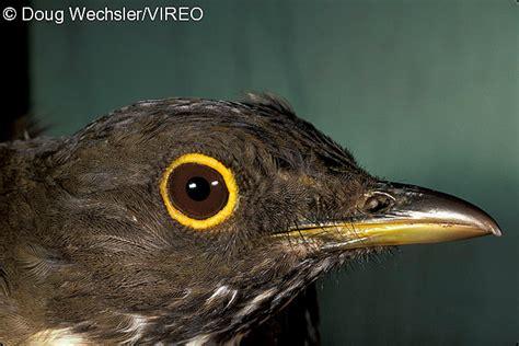 ornithological glossary