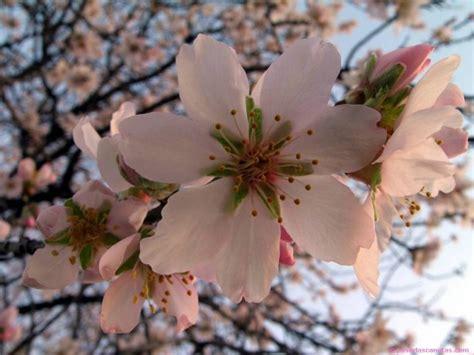 imagenes de rosas japonesas las 10 flores m 225 s hermosas del planeta upsocl