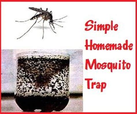 mosquito trap diy yeast 38 best images about tips and tricks on