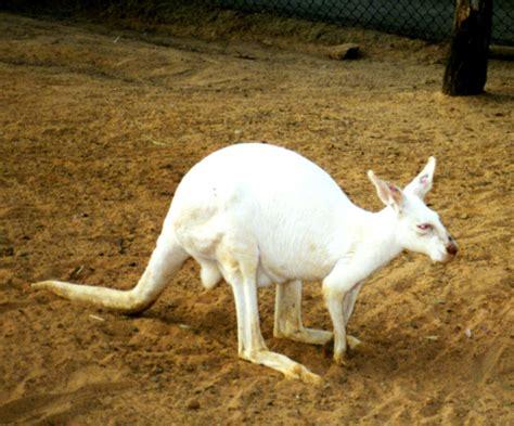 mutagenetix phenotypic mutation deer lecture notes unit 4