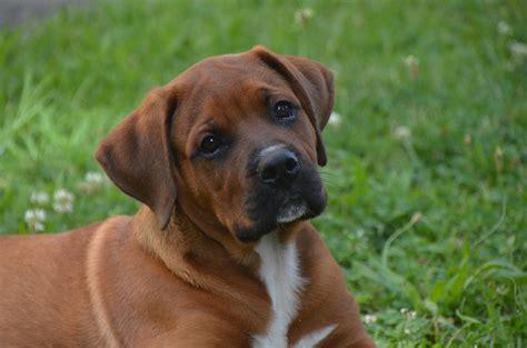 dogs memory span 犬の記憶ってどれくらいあるの 意外と知らなかった犬の