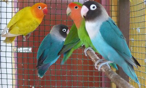 best birds to breed with price list india birds breeding