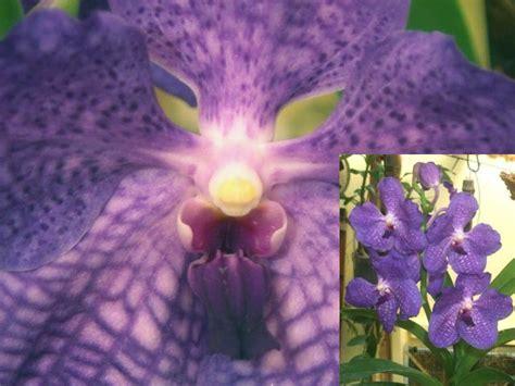 orchidea senza fiori orchidea senza vaso forum di giardinaggio it