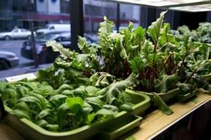 indoor vegetable garden related keywords amp suggestions indoor vegetable garden long tail keywords