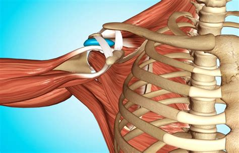 video     shoulder joint paintrauma