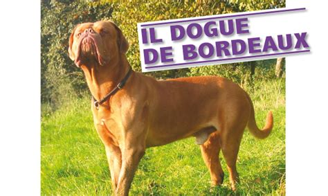 de bordeaux alimentazione dogue de bordeaux