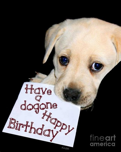 happy birthday puppy images happy birthday puppy card photograph by galok