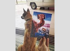 Instagrammer Combines Famous Movie Posters With Real-Life ... Hachiko Movie