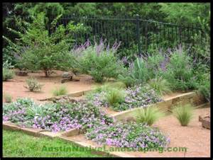 austin and central texas drought resistant and tolerant
