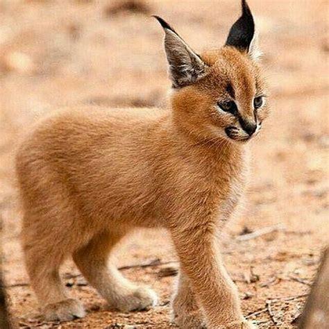 imagenes de animales faras animales salvajes im 225 genes taringa