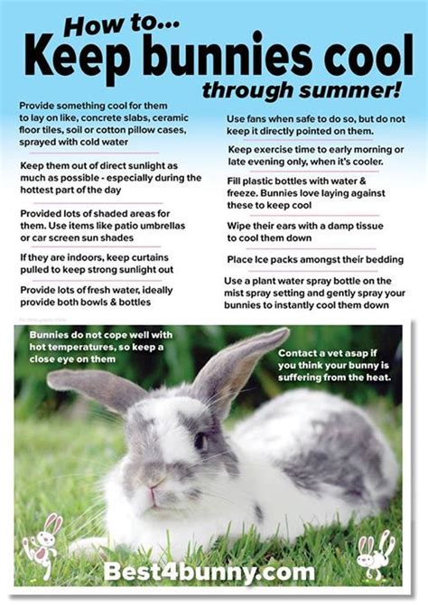 8 Tips On Caring For Pet Rabbits by 17 Best Images About Stuff For Da Furrys On