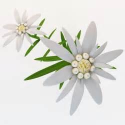 Efficiency Kitchen Design c4d edelweiss flower