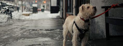 dog friendly places  denver breweries hotels