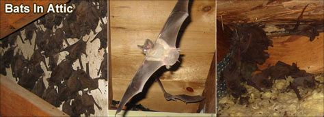 Bat In Bedroom While Sleeping Bedroom And Bed Reviews