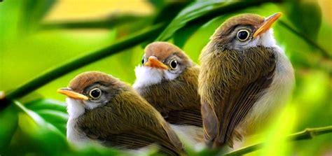 morning birds singing  ringtone downloads animal ringtones