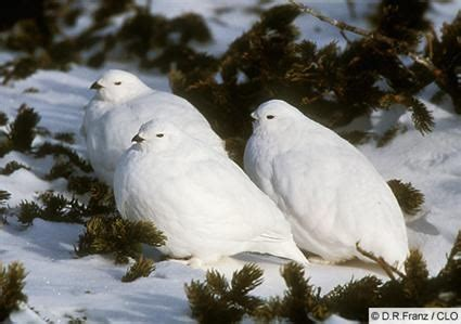 where do birds sleep roosting in nests water flocks