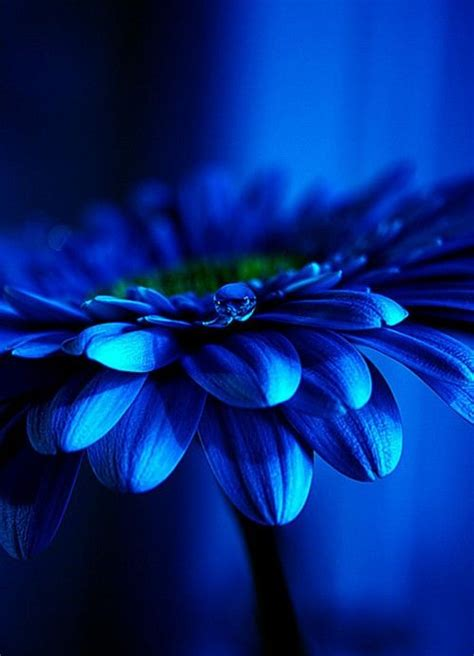 beautiful blue color blue and beautiful into blue pinterest blue blue