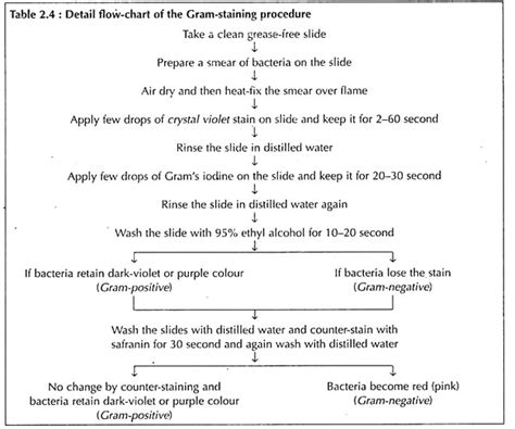 gram staining procedure in flowchart cell structure of bacteria with diagram