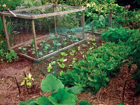 east texas farm and garden