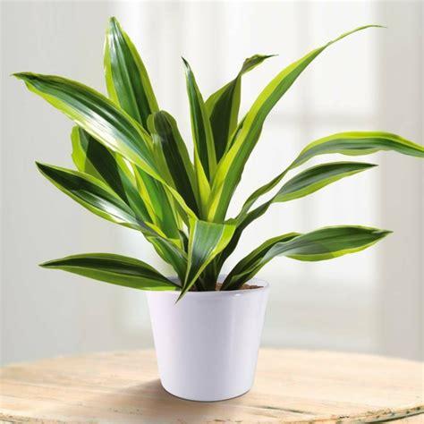imagenes de plantas verdes de interior plantas de interior resistentes 10 ideas y consejos