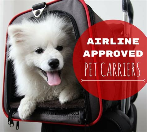 in cabin pet travel 15 must see airline pet carrier pins carrier cat