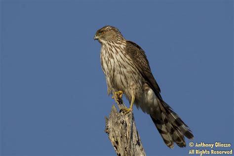 rare bird sighting at bolsa chica wetlands on march 8