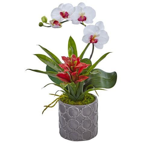 white mini phalaenopsis orchid bromeliad flower arrangement