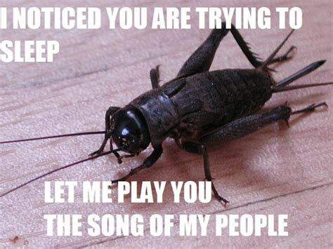 17 best ideas about cricket insect on pinterest bugs
