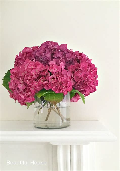 how to care for your hydrangeas beautiful house