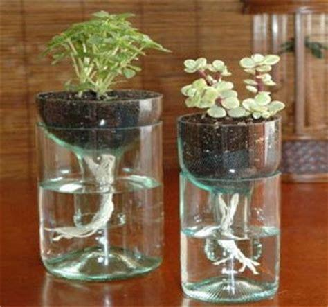 menanam mawar hidroponik cara menanam hidroponik sederhana rumah dan kebun