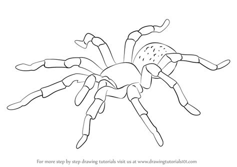 how to draw learn how to draw a tarantula arachnids step by step