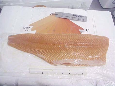 Livingroom Theater Portland Or by Farm Raised Salmon Color 28 Images Farmed Salmon What