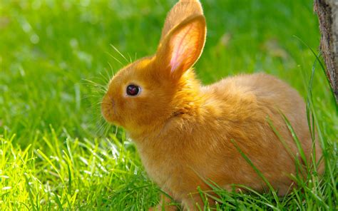 Rabbit Hd Wallpapers Free Pics Of Animals
