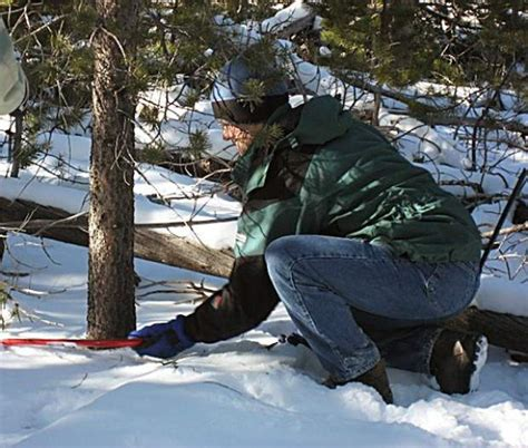 white river national forest christmas tree permits now