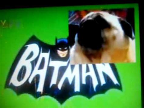 pug says batman pug says batman doovi