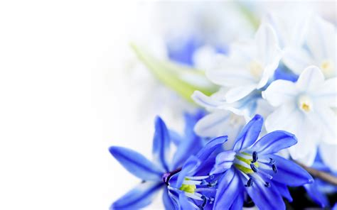 flower wallpaper and backgrounds white flower hd wallpapers