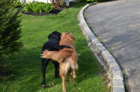 puppy friends walking groups gublog gudog uk