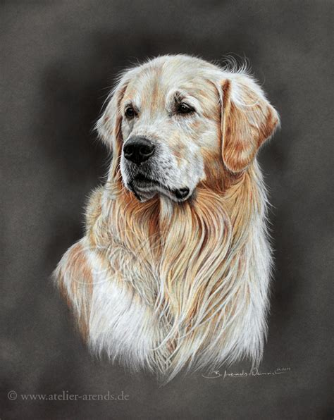 drawings of golden retrievers golden retriever by atelierarends on deviantart