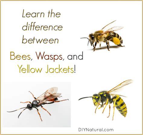 yellow jacket design house gmbh yellow hornet sting www pixshark com images galleries