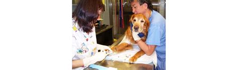 chemotherapy for dogs treating dogs with cancer the difference between chemotherapy and radiotherapy