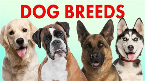 all different dogs different kinds of breeds different types of dogs breeds all breeds picture
