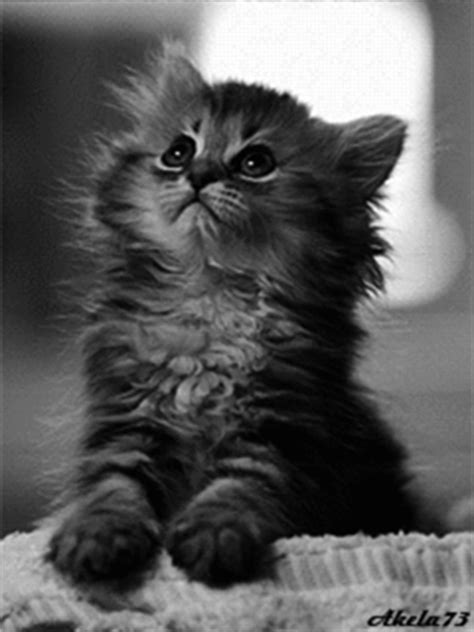 The Saddest Kitten Ever! Pictures, Photos, and Images for