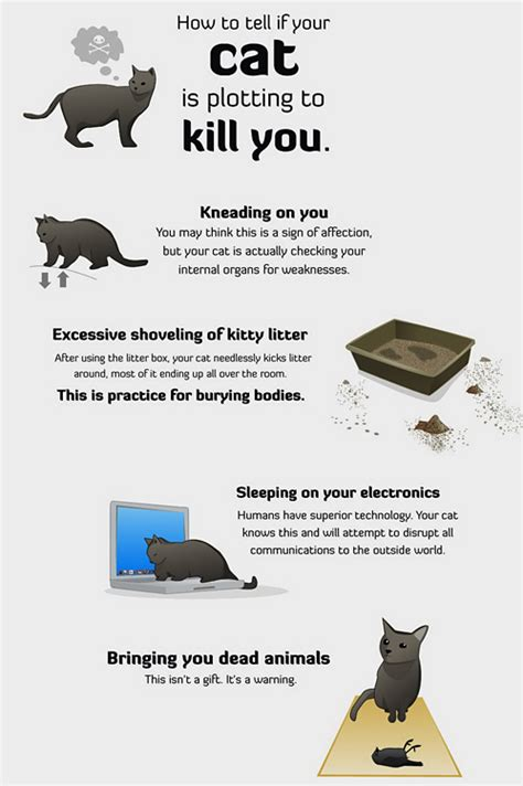 how to tell if your cat is plotting to kill you the oatmeal susanne saville caffeinated natter is your cat plotting