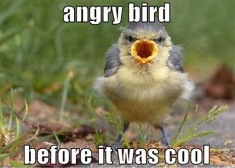 Funny Angry Memes - courage level stork funny bird meme image